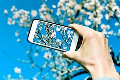 Taking a picture of an almond tree in full bloom Stock Photos