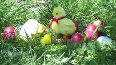 Chicken toy moves between colored eggs placed in the green grass during Stock Footage
