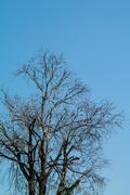 Stock Photo of Dry tree with sky