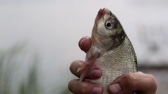Fisherman holding a fish caught in the hand Stock Footage