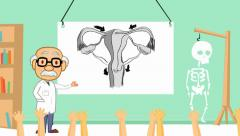 Vagina - anatomy class  - cartoon teacher - stock footage