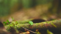Leaf-cutter ants in the amazonian jungle Stock Footage