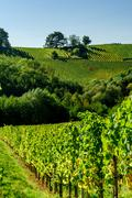 Beautiful alsacien autumnal landscape with green hills and vineyards - stock photo