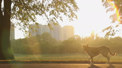 Stray dogs running in city park, beautiful nature in urban landscape background Stock Footage
