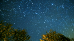 Startrail in the dark night and trees Stock Footage