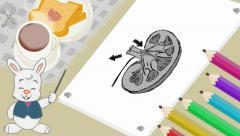 Kidney  - Breakfast Background - rabbit Stock Footage