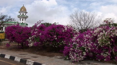 Beautiful flowers beside a mosque in Oman Stock Footage