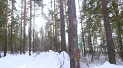 Beautiful winter forest in snow Stock Footage