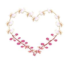 Stock Illustration of Pink Cassia Fistula Flowers in A Heart Shape