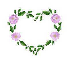 Pink Damask Roses in A Heart Shape Stock Illustration