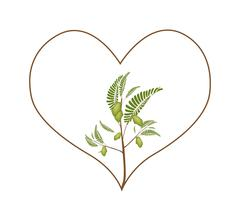 Chick Peas Plant in A Heart Shape Frame Stock Illustration