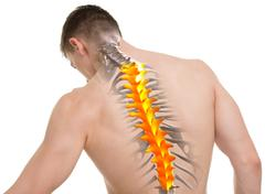 Thoracic Spine Anatomy isolated on white Stock Photos