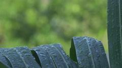 Raindrops on Palm Leaves Closeup Stock Footage