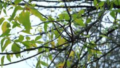 Slowmotion view on a leaves on branches of trees which fans breeze Stock Footage
