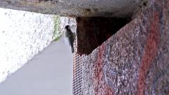 Stock Video Footage of Slowmotion little bird climbs up wall of old house under roof