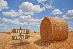 Stock Photo of Flour or Wheat wooden direction sign in agricultural field.