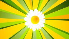 Summer video animation with camomile and beams Stock Footage