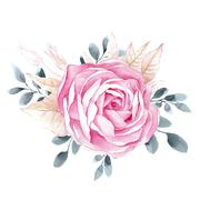 Watercolor illustrations of rose flower isolated on white background Piirros