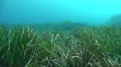 Sea grass Mallorca Spain Stock Footage