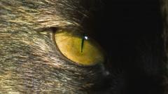 Cat's eye on sun Stock Footage