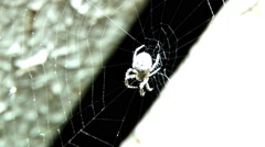 Spider hanging on his canvas, waiting for prey to midnight on a street less Stock Footage