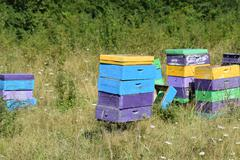 Small apiary in the foothills. - stock photo