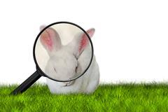 Bunny seeking Easter eggs Stock Photos