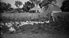 1934: Man feeding big flock of farm birds in rural setting. Stock Footage