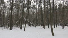 A forest scene in winter with snow on the ground Stock Footage