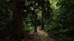 Stock Video Footage of Walking, trekking through forest, woods