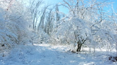 Snowy branches in forest. Beautiful day in forest at wintertime 12 Stock Footage