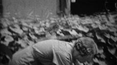 1935: Women picking cabbage head from depression era garden. Stock Footage