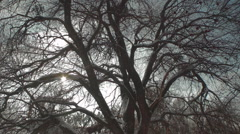 Upper Branches of Old Tree in Winter Forest Stock Footage