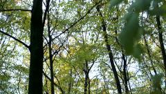 Slowmotion high broadleaved trees in forest Stock Footage