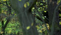 Slowmotion tress with fresh green leaves Stock Footage
