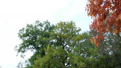 Slowmotion trees with green and colorful leaves Stock Footage