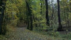 Slowmotion foothpath in forest with fallen leaves Stock Footage