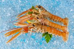 Fresh lobsters isolated on ice drift Stock Photos