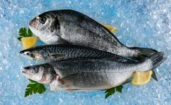 Fish placed on ice drift - stock photo