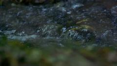 Slowmotion water rapid flows across the stones in river Stock Footage