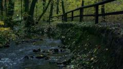 Slowmotion trail along the river in forest Stock Footage