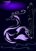 Swan, pond and night - stock illustration