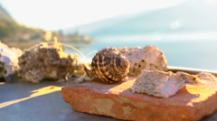 Decorative shells on the stone rg Stock Footage
