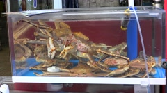 Alive King Crabs in a tank at the Jagalchi Fish Market. Busan, South Korea Stock Footage
