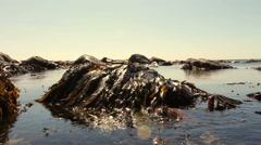 Seaweed covered boulders on the North Welsh Coast - stock footage