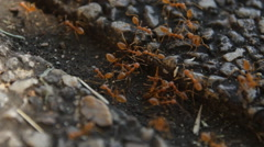 Red ants on floor Stock Footage
