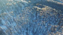 Frozen Trees and a Road From the Air Stock Footage