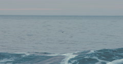 Slow Motion Bird Flying over Ocean, Beautiful Wave Stock Footage