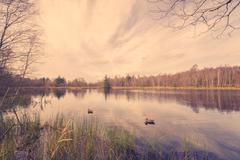 Idyllic lake scenery with lure ducks - stock photo