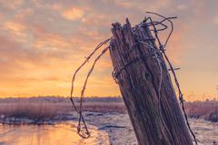 Wooden fence post with barb wire - stock photo